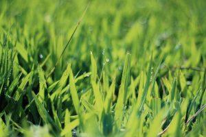 grass-1149139_1920
