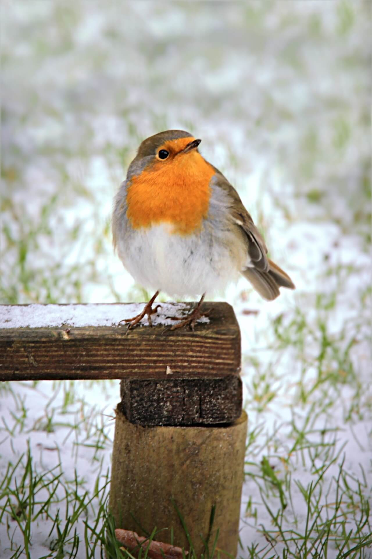voedsel voor vogels
